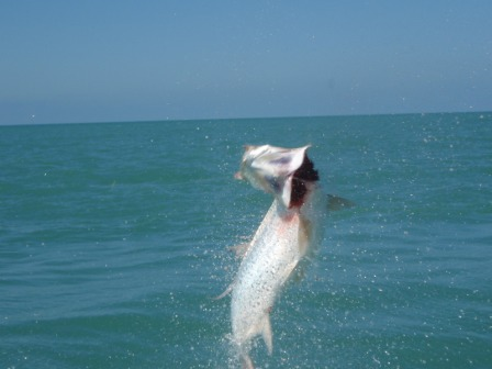 Fort Myers Tarpon Fishing Charter Tours Captain