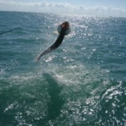 Fort Myers Tarpon Fishing Charters