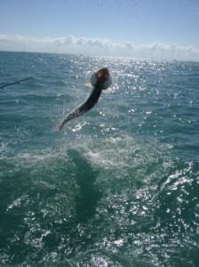 Fort Myers Tarpon Fishing Charters