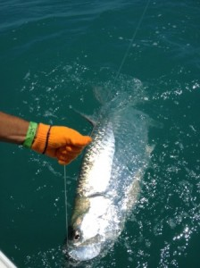 Tarpon fishing in Fort Myers