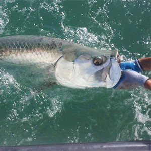 Bait Fish in Fort Myers and Sanibel