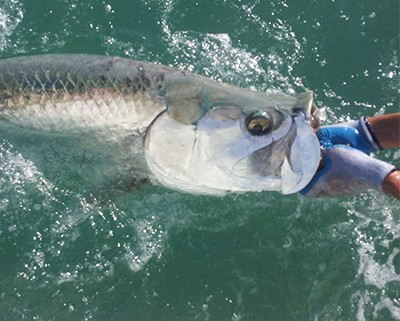 big bait fish