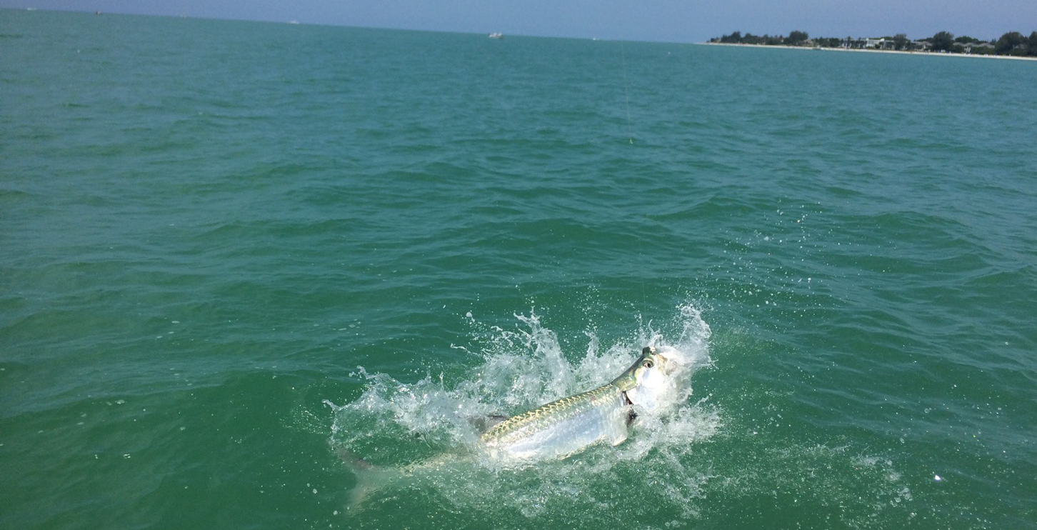 Tarpon fishing charters snook redfish for Tarpon fishing charters